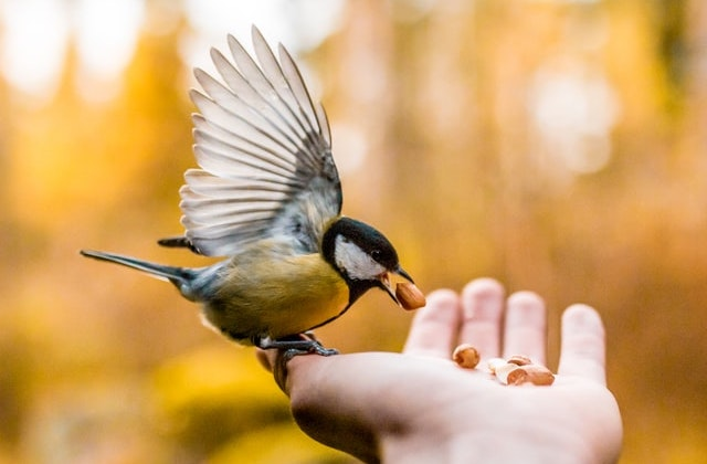 God Takes Care of the Birds