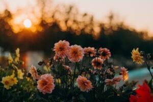 flowers_sun.jpg