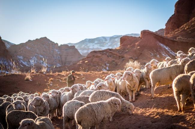 The Work of Jesus, the Good Shepherd