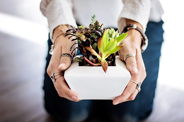 succulents-in-hand.jpg