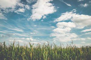 wheat_field_sky.jpg